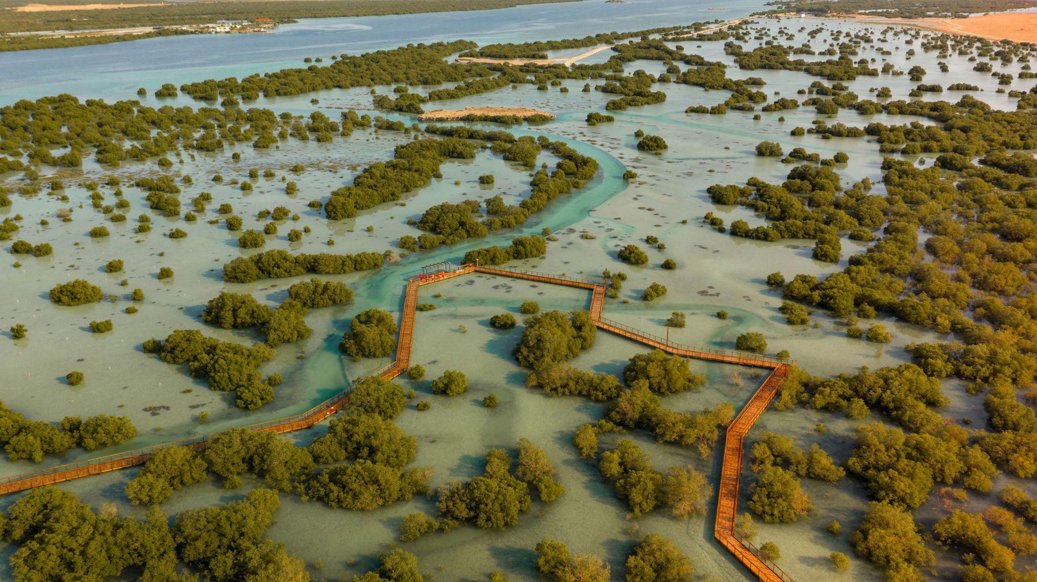 Holzbohlensteg durch den Mangrovenpark in Abu Dhabi